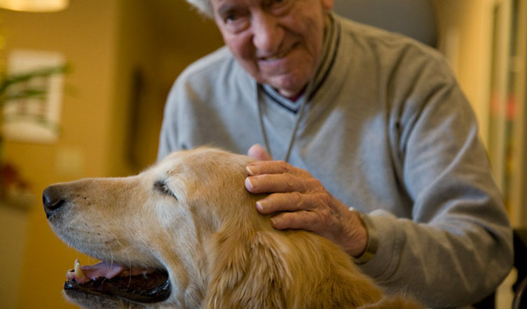 Becoming A Therapy Dog Uk